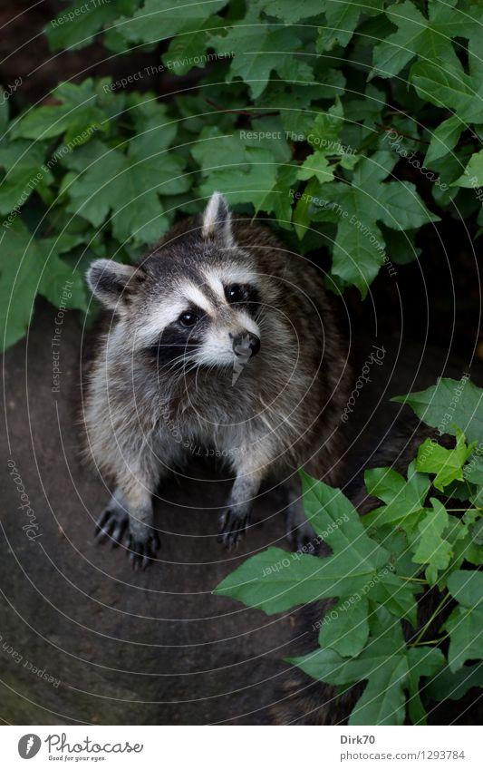 Who, ME? Natur Stadt Baum Blatt Tier Wald Umwelt See Park Erde Wildtier niedlich Neugier Sehenswürdigkeit Tiergesicht Säugetier