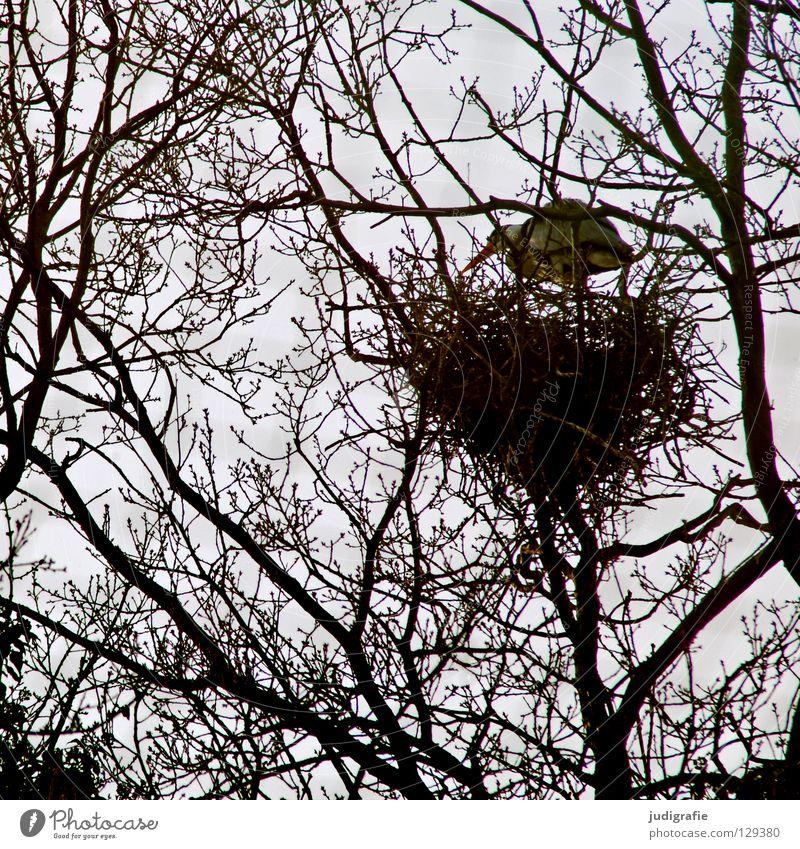 Hoch oben Natur Baum Pflanze Tier Haus Umwelt Vogel Sicherheit Ast Ei durcheinander Geäst Nest Reiher Brutpflege Gelege
