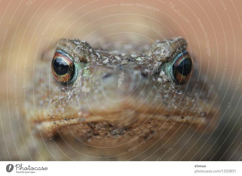 Mach's einfach! Frosch Kröte Traumprinz Küssen Kussmund Märchen Angesicht zu Angesicht beobachten Blick Neugier selbstbewußt Coolness friedlich Wachsamkeit