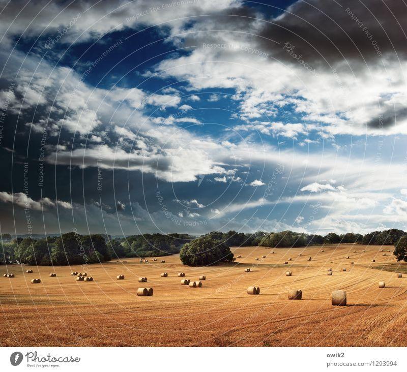 Feldzug Umwelt Natur Landschaft Himmel Wolken Horizont Sommer Klima Schönes Wetter Wärme Pflanze Baum warten groß Idylle Ferne Ernte Strohballen Strohrolle