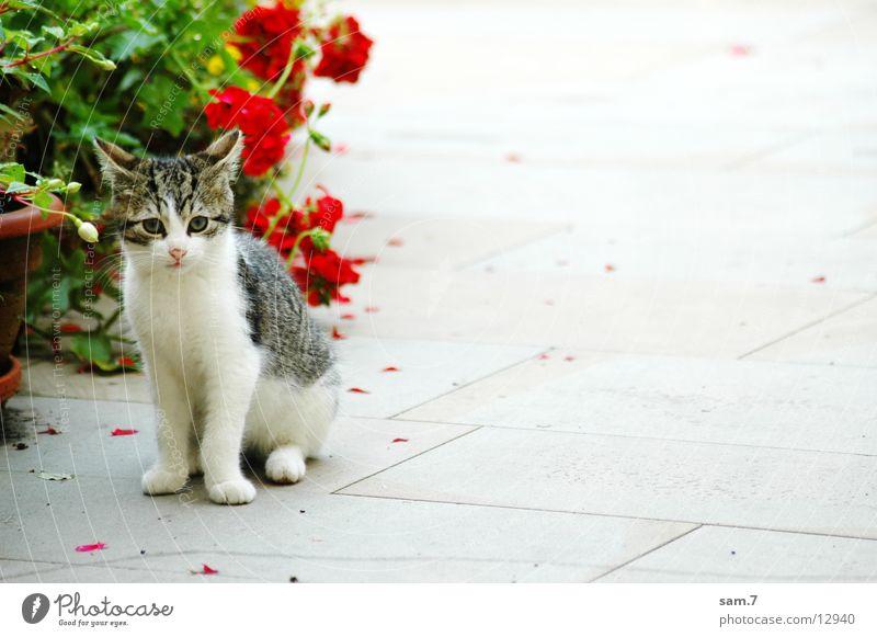 Supersüß Blume Traurigkeit Katze sitzen Trauer niedlich Schüchternheit Treue