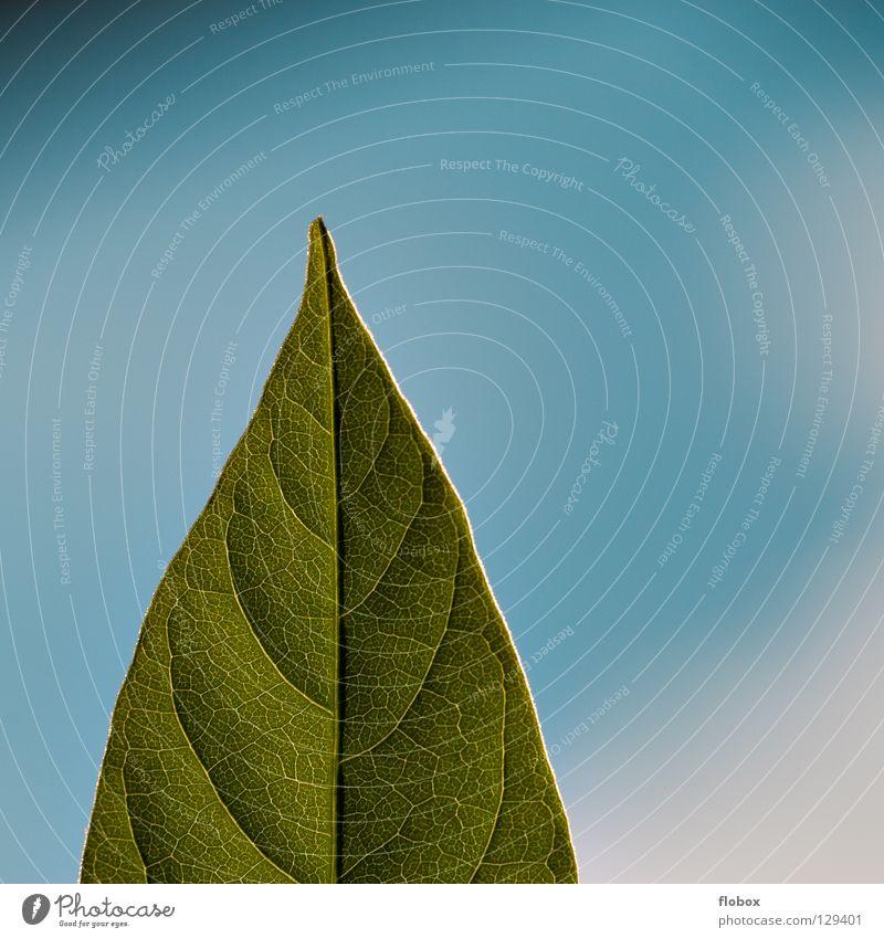 Hallo Sonne im QUADRAT! Natur Himmel Baum grün blau Pflanze Sommer Freude Wolken Leben springen Frühling Wärme Kraft Umwelt geschlossen
