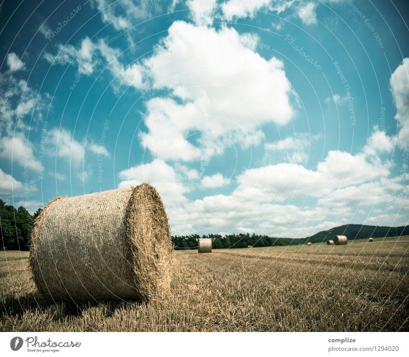 Klassiker Himmel Natur Ferien & Urlaub & Reisen Pflanze Sommer Sonne Erholung Landschaft ruhig Ferne Umwelt Wiese Gras Freiheit Wetter Feld