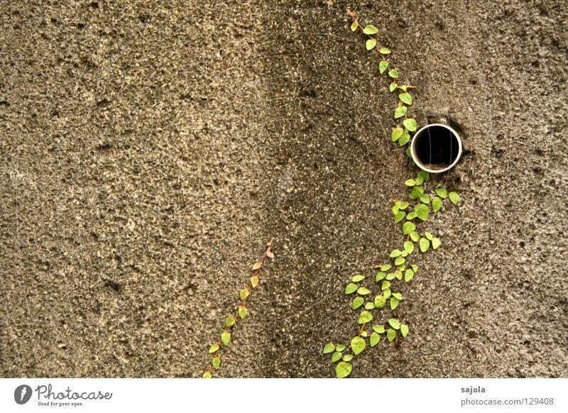 gross.stadt.dschungel.detail II alt grün Pflanze schwarz Wand grau Stein Mauer dreckig Röhren Loch Abfluss gestreift Grünpflanze Kletterpflanzen Abflussrohr