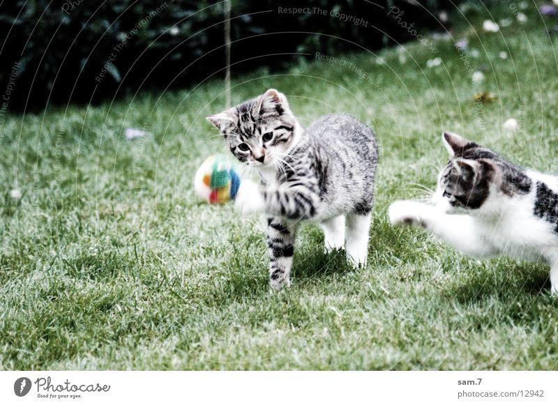 Spielkatze II springen Spielen Katze süß Ball niedlich