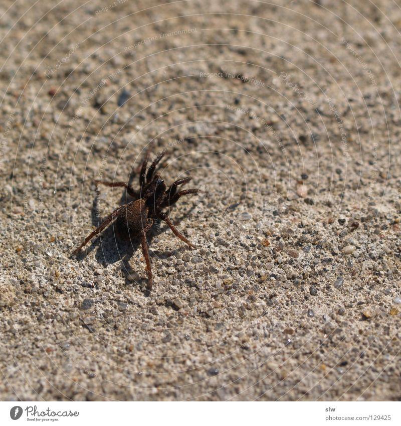 Spinne Straße Gras Beton Bodenbelag Netz beobachten krabbeln Spinnennetz