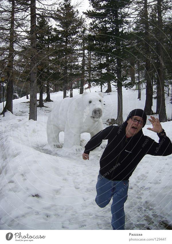 Bärenjagd Winter Schnee Angst gehen rennen Tier Schweiz Jagd Flucht Panik Bär Schrecken Wildnis Eisbär