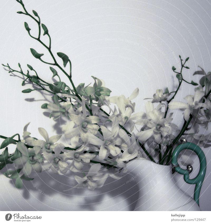 oh oh Orchidee Vase Krug Griff Pflanze Blume Blüte Reifezeit Schmarotzer Botanik Biologie Blümchensex Lebewesen Stengel Dekoration & Verzierung Evolution Ranke