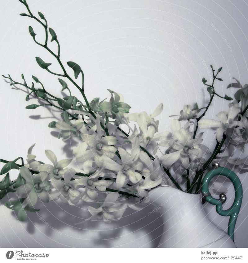 oh oh weiß Pflanze Blume Farbe Blüte gold mehrere Erfolg Wachstum Dekoration & Verzierung Klettern Lebewesen Stengel türkis Urwald Duft