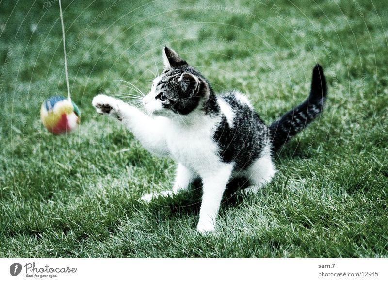 Spielkatze I Spielen Katze süß Ball niedlich