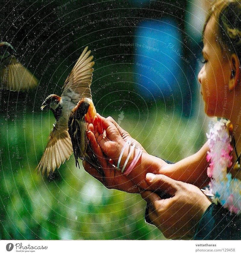 Flying Beauty.... Paris Vogel Feeding Sparrow Pretty Birds Amazing Snap it