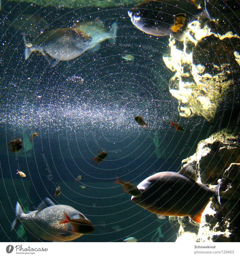 Glitzerwelt Aquarium Zoo Spiegel Spiegelbild glänzend Freude Fisch Schifffahrt Natur Wasser Stein