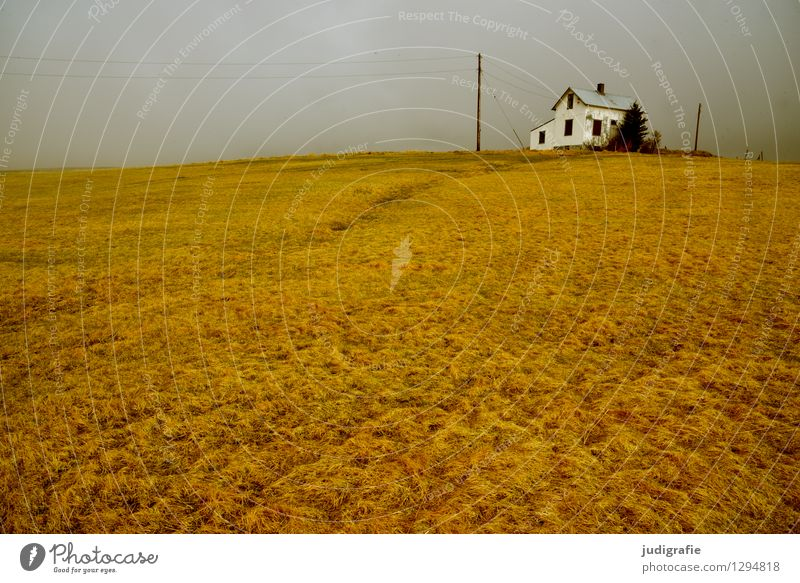 Island Umwelt Natur Landschaft Klima Gras Wiese Haus Traumhaus Hütte Gebäude klein natürlich wild Stimmung Einsamkeit Idylle ruhig Ferne Häusliches Leben