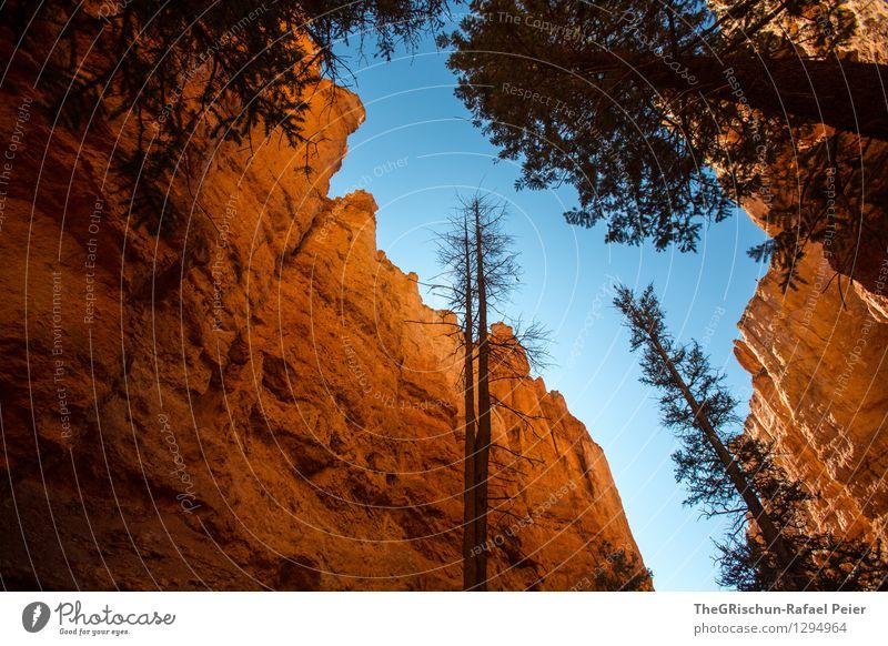 Bryce Reloaded Umwelt Natur Landschaft Pflanze Urelemente Erde Luft Himmel Wolkenloser Himmel blau braun gelb gold orange schwarz Baum Stein Felsen Bryce Canyon