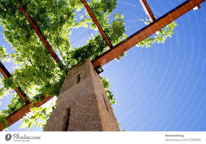 begrünt Umwelt Natur Pflanze Himmel Wolkenloser Himmel Sonne Sonnenlicht Sommer Wetter Schönes Wetter Blatt Allariz Spanien Mauer Wand Dach Säule Stein Holz