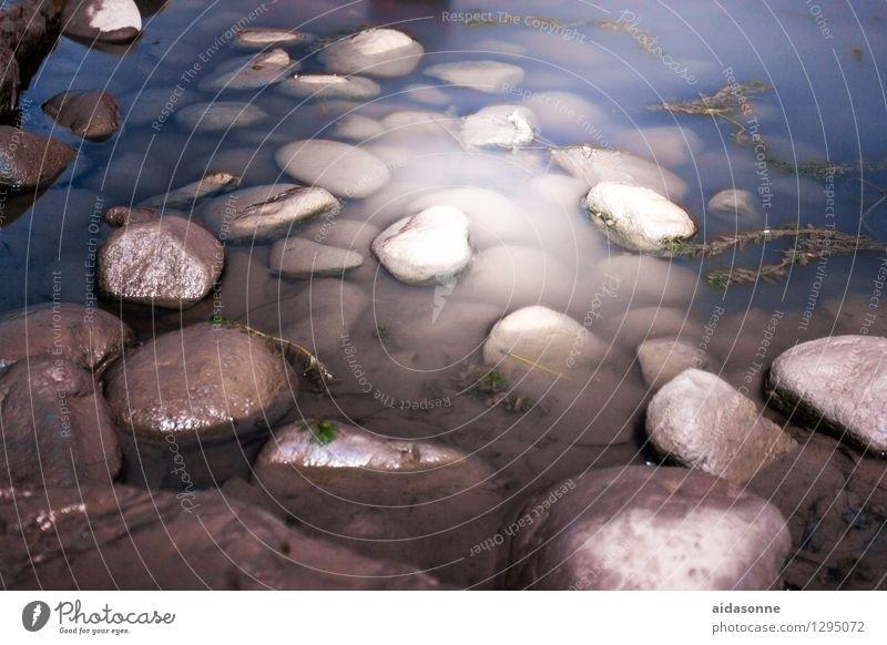 Steine im Wasser Natur Sommer Küste Fluss Yangtze ruhig Felsen Wasserpflanze Kletterpflanzen Nacht Mondlicht Farbfoto Außenaufnahme Menschenleer Licht