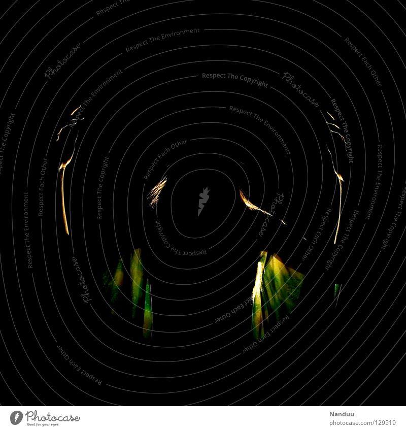 Elfentanz, die zweite dunkel Geister u. Gespenster Dingsbums Gegenlicht grün schwarz gruselig ruhig Angst Panik Tanzen Club Fee gruslig Idee