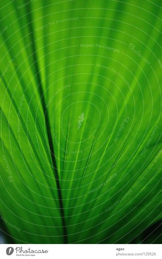 gruen Frühling Makroaufnahme grün frisch Pflanze Baum deteil Natur
