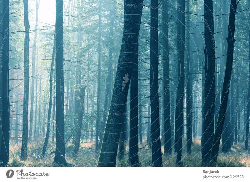 Ich glaub ich steh im Walde Natur blau Baum Sonne Freude Blatt Wald gelb Herbst Wege & Pfade Luft Park Erde Nebel Spaziergang Frieden
