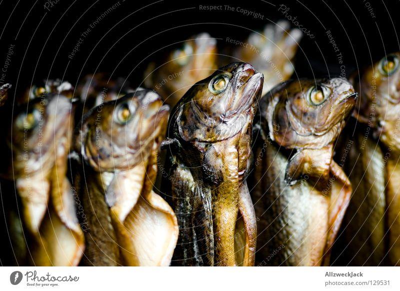 hang out with da Fischechor Bachforelle Räucherfisch aufgespiesst hängen Fischereiwirtschaft Snack Fischauge Forelle räucherofen Markt Ernährung mehrere
