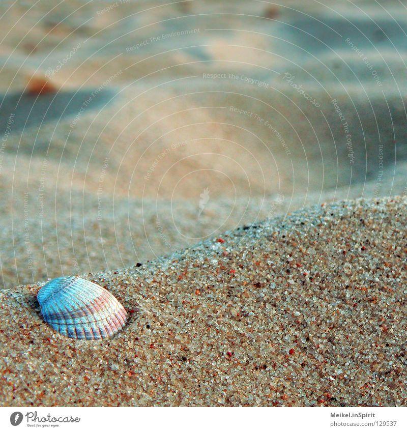Wozu noch weit weg? Meer rot Sommer Strand Ferien & Urlaub & Reisen ruhig Einsamkeit gelb Leben Erholung See Sand Zufriedenheit Küste Wellness Muschel
