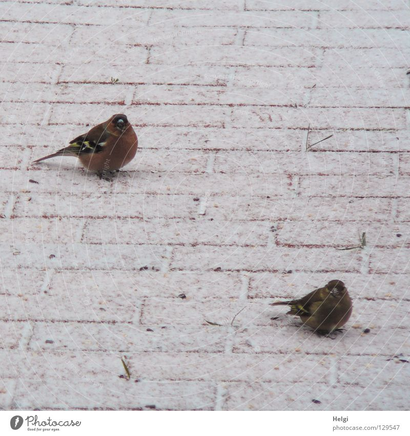gemeinsam warten.... weiß rot Winter schwarz kalt Schnee Garten Frühling Wege & Pfade Fuß braun Vogel Eis Zusammensein Tierpaar