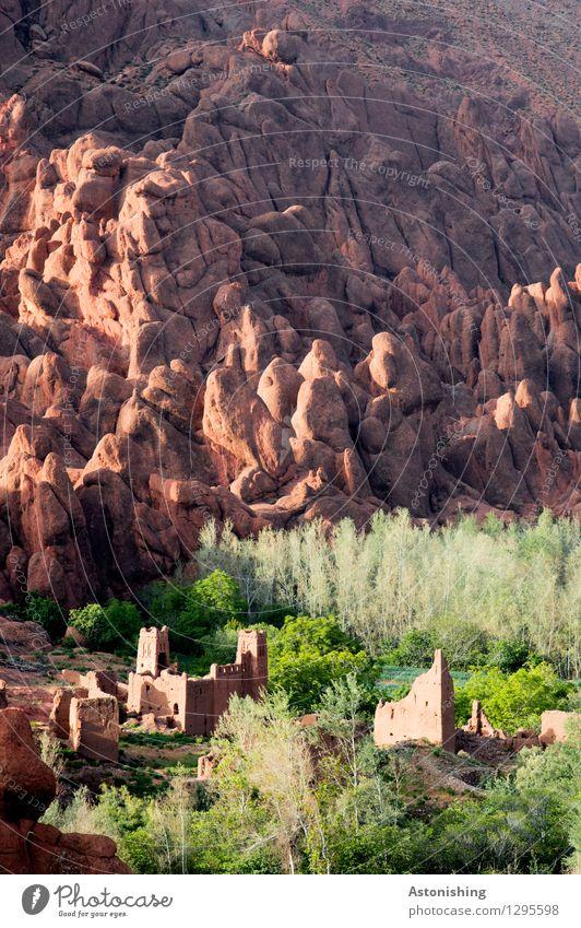 Kasbah Natur Stadt alt Pflanze grün Sommer Baum Landschaft Wald Berge u. Gebirge Reisefotografie Umwelt Wand Gras Mauer klein
