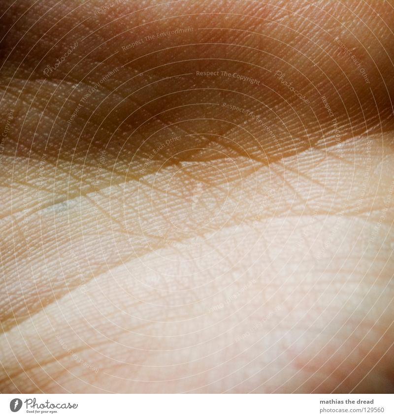 Verkehrsnetz blau rot Leben Linie Beleuchtung Gesundheit Haut klein Spuren Vergänglichkeit Teile u. Stücke Falte Blut Furche durcheinander Gefäße