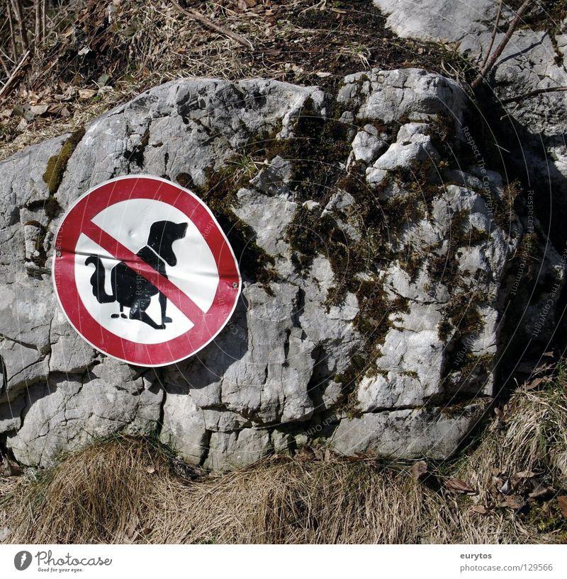Kackvogel Gras Hund Schilder & Markierungen Felsen Kot Zeichen Säugetier Verbote Verbotsschild