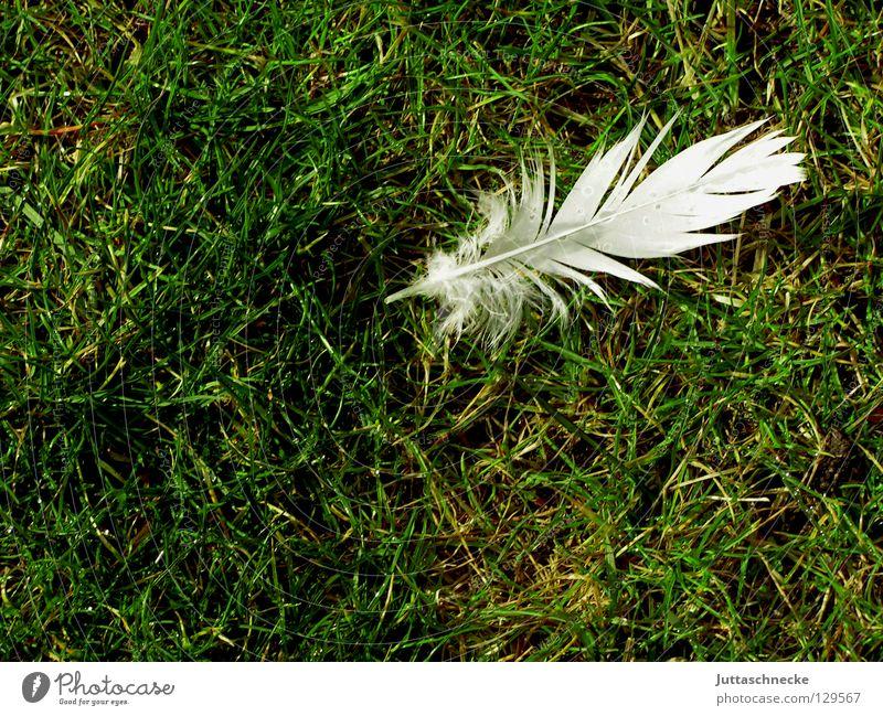 Vogelpuzzle Teil 1 weiß grün Gras Wiese Feder einzeln leicht Schweben weich verloren Taube verlieren Flaum Daunen Frieden Schwäche Rasen Juttaschnecke fliegen