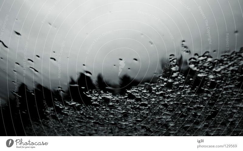 I <3 Frühling :: Spaziergang im Regen Natur Wasser weiß schön Freude Farbe schwarz Leben kalt Schnee klein Hintergrundbild Glas dreckig nass Wassertropfen