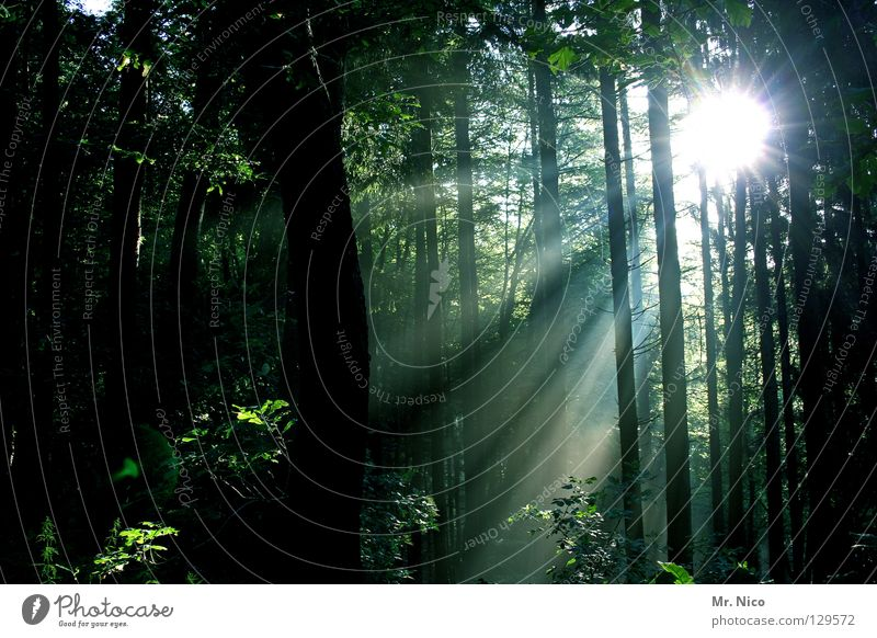 Lichtblick Natur Baum Sonne grün Blatt schwarz Wald dunkel Wärme hell Beleuchtung Stern (Symbol) Frieden Klima dünn Physik