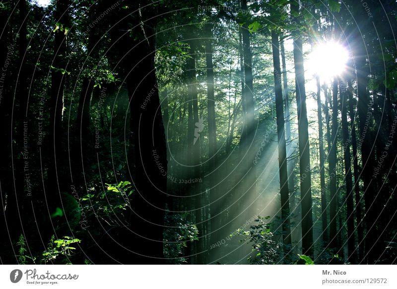 Lichtblick Wald Lichteinfall Beleuchtung Strahlung Sonnenstrahlen Lichtstreifen grün dunkel Reflexion & Spiegelung Baum Baumstamm dünn Streifen Blatt Laubwald