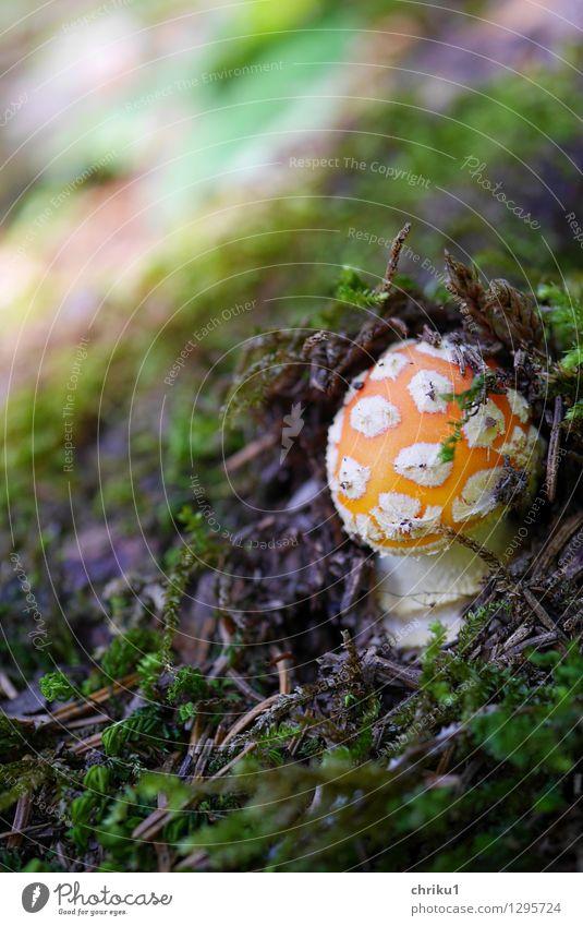 """""""Plopp"""" Natur grün weiß Tier Wald Berge u. Gebirge Umwelt Herbst orange frisch Erde Moos Pilz"""