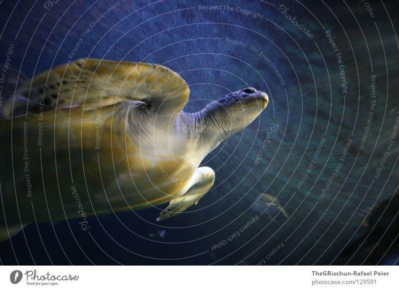 Hey Dude II Schildkröte grün nass feucht Licht gefangen schimmern unten Wasserschildkröte Fisch grünlich blau Beleuchtung Lichtstrahl Fensterscheibe Glas