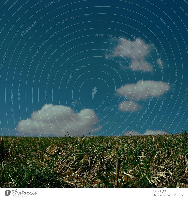 entspannter Ausblick Natur Himmel weiß grün blau Pflanze Sommer Ferien & Urlaub & Reisen ruhig Wolken Ernährung Einsamkeit Ferne Farbe dunkel Erholung