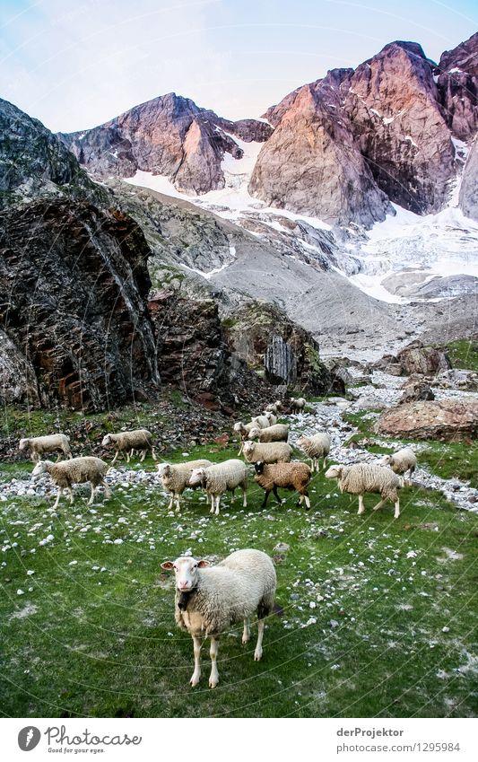 Gestelltes Bild: Pyrenäen-Wanderweg 25 Natur Ferien & Urlaub & Reisen Pflanze Sommer Landschaft Tier Ferne Berge u. Gebirge Umwelt Gefühle Wiese Freiheit Felsen
