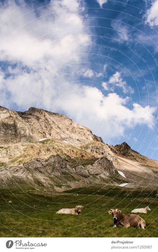 Kuh – Berg – Himmel Natur Ferien & Urlaub & Reisen Pflanze Sommer Landschaft Tier Ferne Berge u. Gebirge Umwelt Wiese Freiheit Felsen Tourismus wandern Ausflug