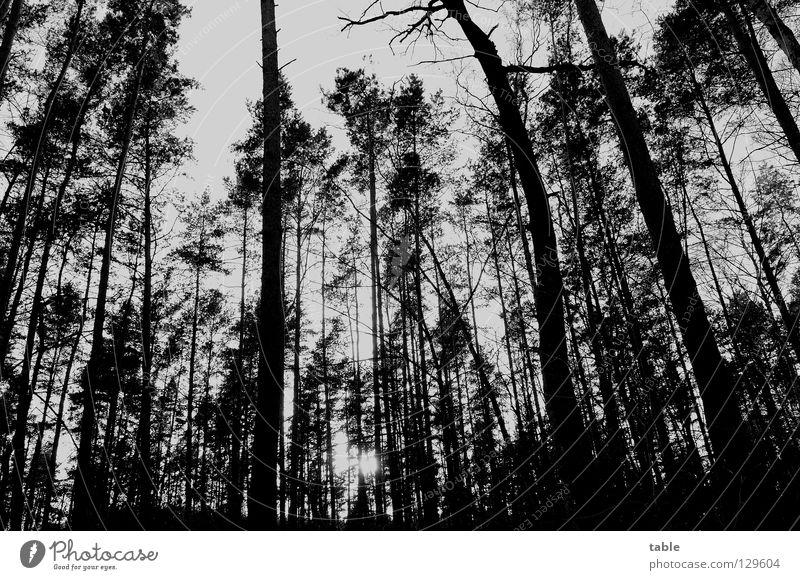 Waldschadensbericht Baum Nadelbaum Laubbaum Dürre Abgas Schadstoff Straßenverkehr Emission Saurer Regen Waldsterben Baumkrone Stress Schädlinge Umweltschutz