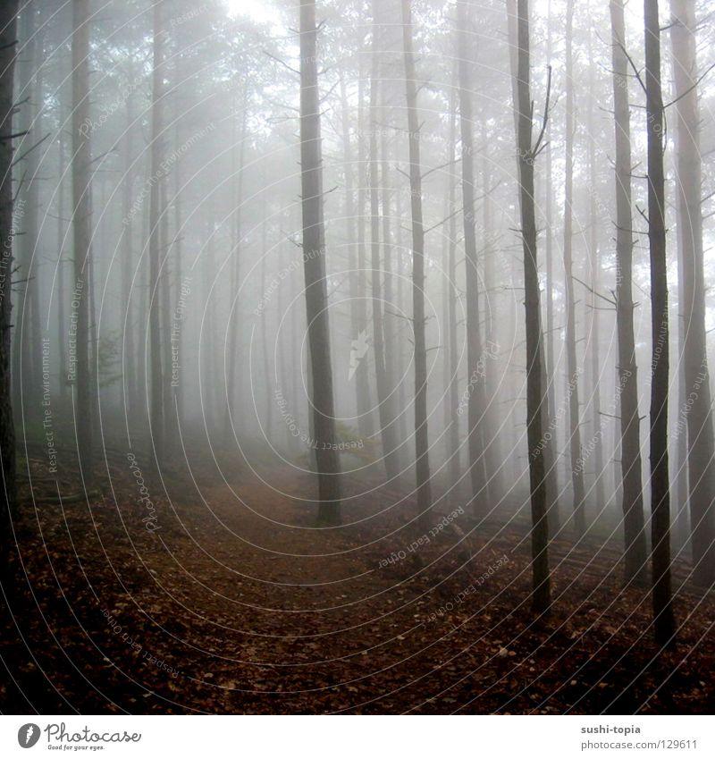 weißer wald Natur Himmel Baum Winter Blatt Wald Herbst grau braun orange wandern Nebel Ast Vergänglichkeit Baumstamm