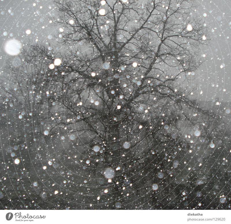 Frühlingsgefühle? Baum Winter ruhig kalt grau Schneefall Eis Wetter Jahreszeiten Schneeflocke