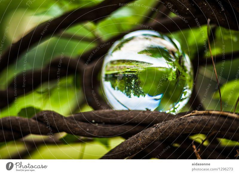 Glaskugel Natur Pflanze Garten Park Wald Dekoration & Verzierung Kitsch Krimskrams Zufriedenheit Lebensfreude achtsam Vorsicht Gelassenheit ruhig Farbfoto