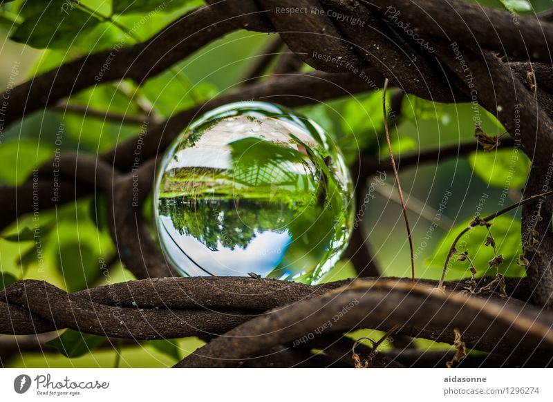 Glaskugel Natur Pflanze Sommer Garten Park Wald Dekoration & Verzierung Kitsch Krimskrams Kugel achtsam Vorsicht Gelassenheit geduldig ruhig Farbfoto