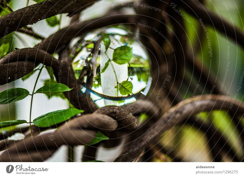 Glaskugel Natur Pflanze Garten Park Wald Dekoration & Verzierung Kitsch Krimskrams achtsam Verlässlichkeit Vorsicht geduldig ruhig Farbfoto mehrfarbig