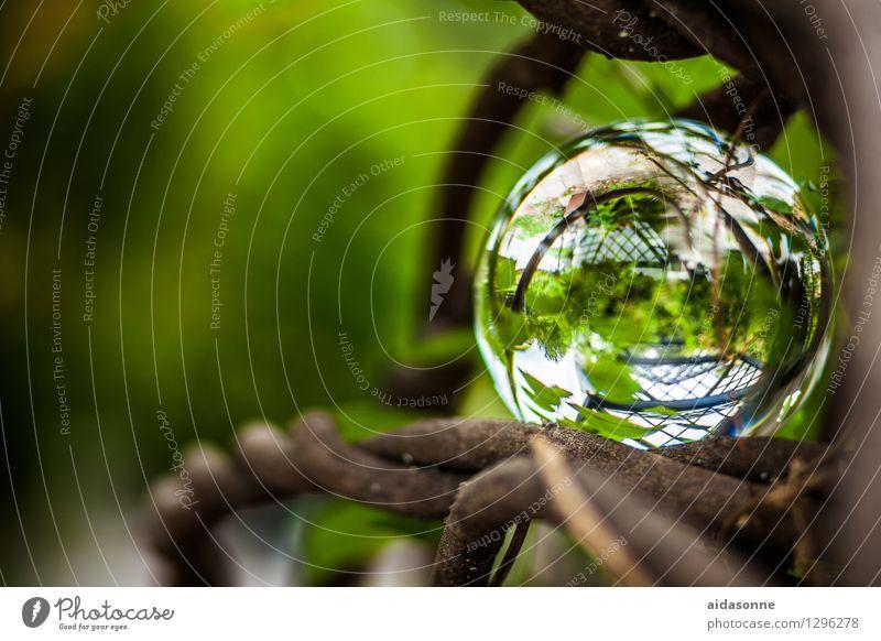 Glaskugel Natur Pflanze Sommer ruhig Wald Garten Park Kitsch Gelassenheit achtsam Krimskrams