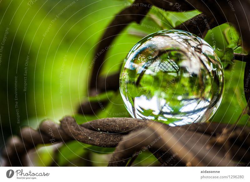 Glaskugel Natur Pflanze Garten Park Wald Dekoration & Verzierung Kitsch Krimskrams achtsam Wachsamkeit Vorsicht Gelassenheit geduldig ruhig Farbfoto
