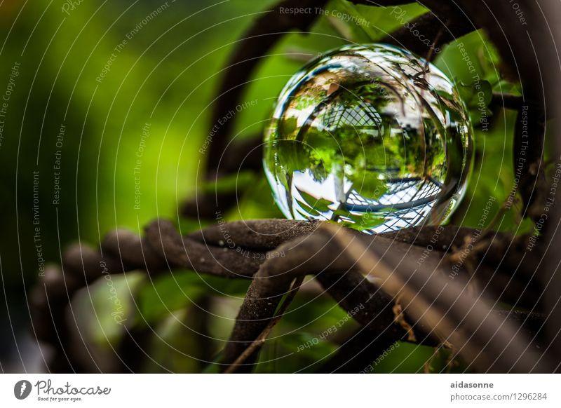 Glaskugel Pflanze Sommer ruhig Garten Park Dekoration & Verzierung Glas Gelassenheit Grünpflanze Glaskugel