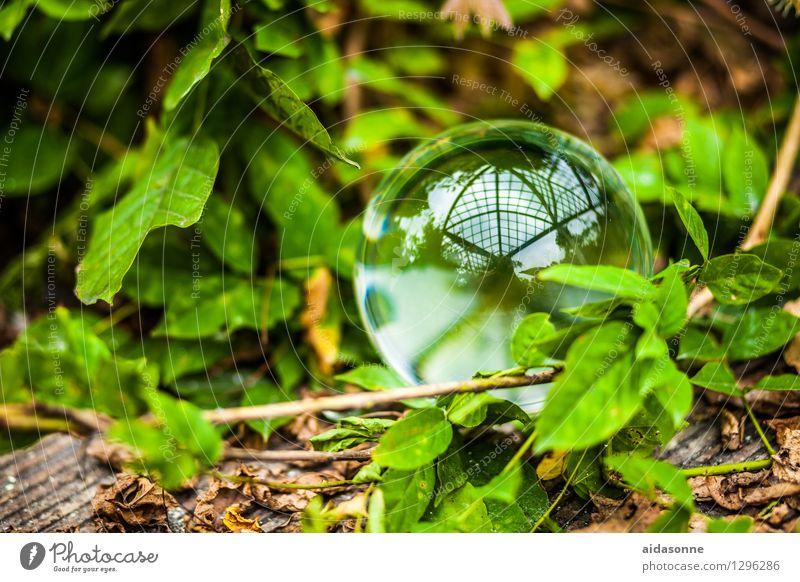 Glaskugel Natur Pflanze Sommer ruhig Wald Garten Park Gelassenheit Vorsicht achtsam