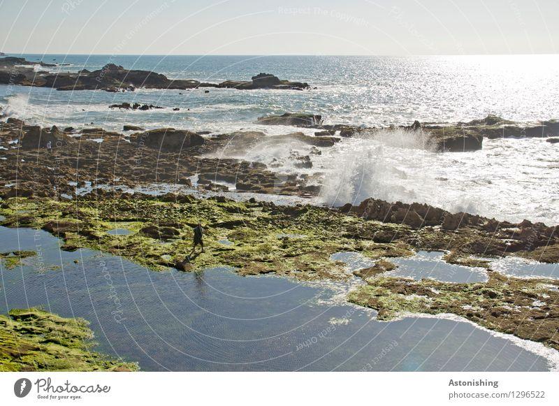 Atlantik Mensch maskulin Körper 1 Umwelt Natur Landschaft Pflanze Wasser Himmel Wolkenloser Himmel Horizont Sonne Sommer Wetter Schönes Wetter Moos Algen Felsen