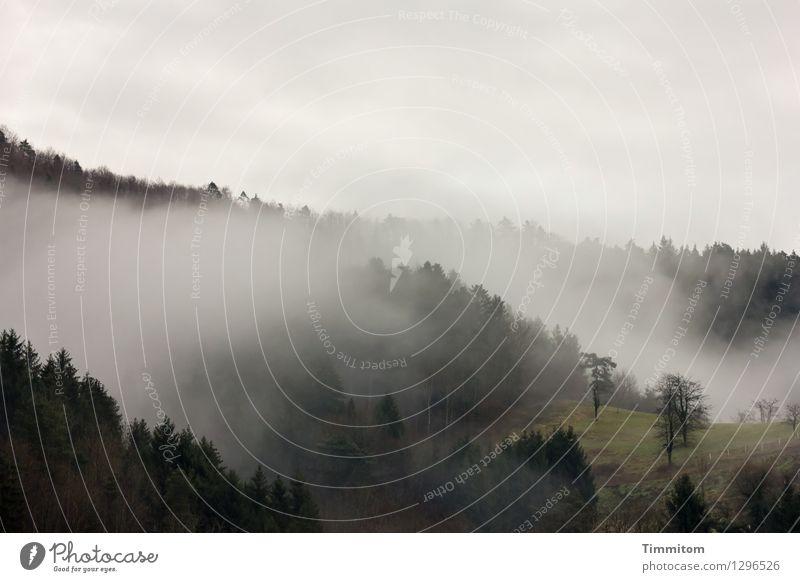 Wellentäler. Natur Pflanze grün Landschaft Wolken dunkel Wald schwarz Umwelt Frühling Gefühle natürlich grau Nebel Hügel Tal